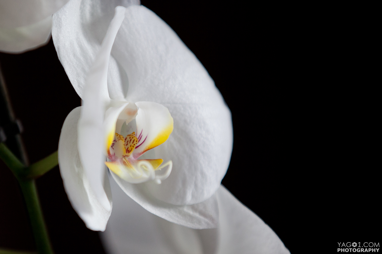 Organic Orchid 2