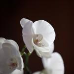 Organic orchid